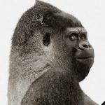 Wat is... Gorilla Glass